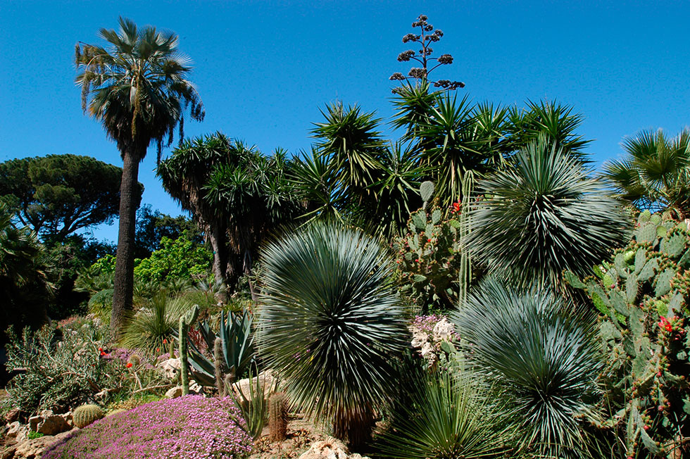 Les Parcs Et Jardins Du Territoire Metropole Toulon Provence