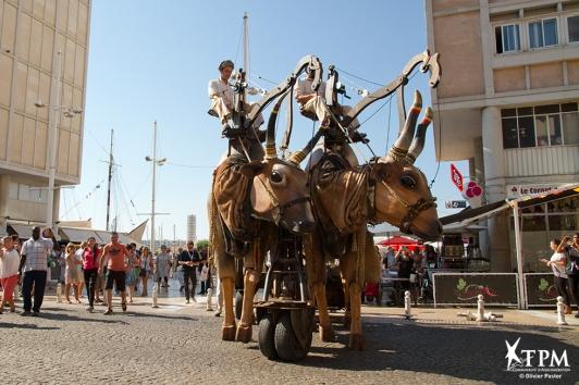 Les Vaches Sacrées - déambulation dans le centre ville de Toulon