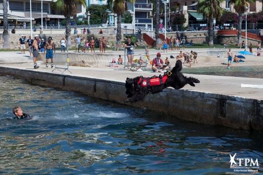Les chiens sauveteurs de Saint-Mandrier-sur-Mer