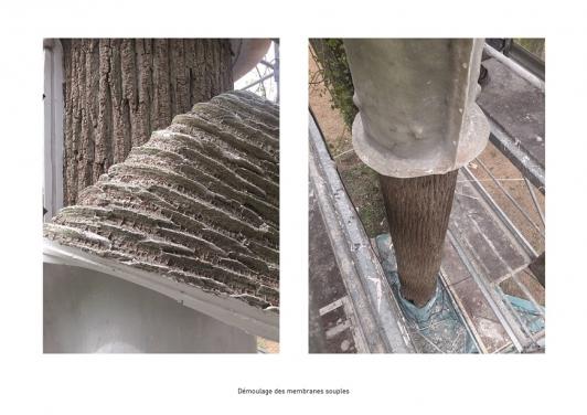 Moulage de l'écorce du frêne