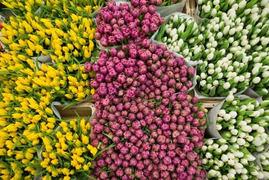 Marché aux fleurs, Hyères - © Olivier Pastor