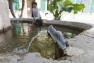 Bassin Jardin remarquable de Baudouvin