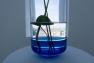 "Exposition ""La beauté des plantes aquatiques"" de Carolien Niebling"