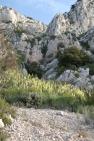 Falaise éboulis de calcaire au Baou de Quatre Ouro