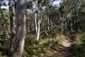 Forêt de Janas