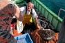 Vente directe de poisson - Port du Niel
